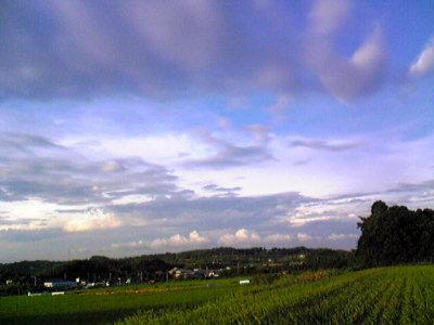 今日の田舎。
