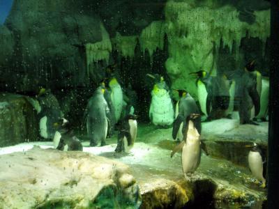 090418+kaiyu+penguin1_convert_20090424225259.jpg
