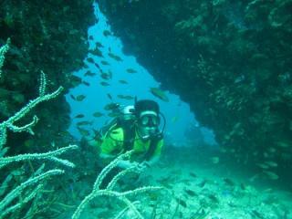 ピピ島ダイビング シミラン プーケット タイ