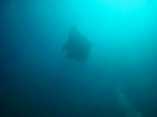 phuket diving thailand