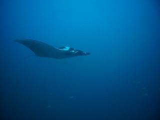 similan phuket diving シミラン クルーズ