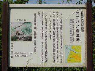 onibasu03.jpg