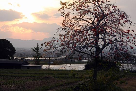 山辺の道 晩秋3