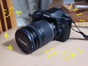 DSC09237z.jpg