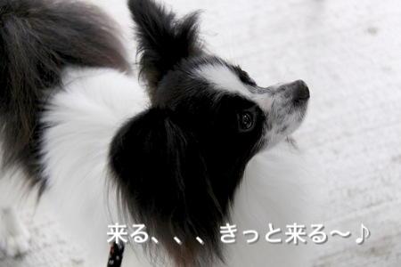 IMG_1218p.jpg