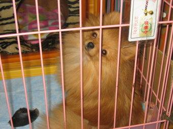 sizukaomamori0701072.jpg