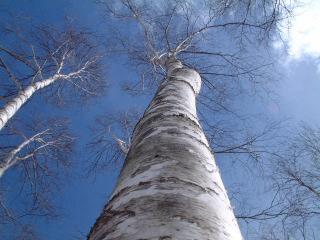 20050225.jpg