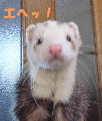 H様宅コタロちゃん