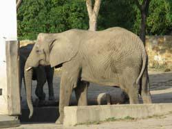 ワルシャワ動物園 象