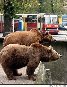 ワルシャワ動物園 クマ