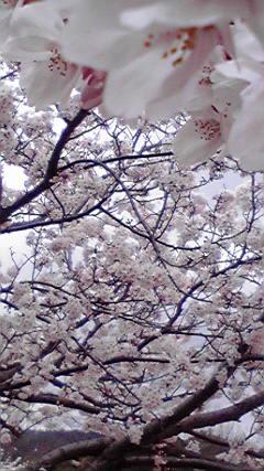 2008_0405画像0014