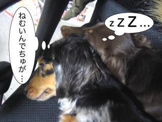 dogcat 058