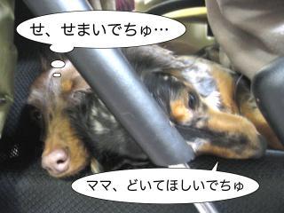 dogcat 064