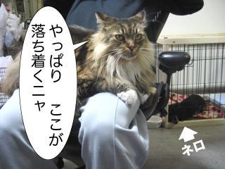 dogcat 083