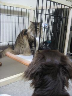 dogcat 053