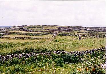 イニユシュモア島石囲いの牧草地