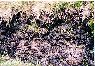 コマネラ国立公園の散歩泥炭露出