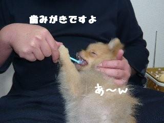 haburashi.jpg