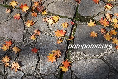 石畳に落ち葉