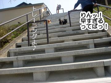 2009桜-006