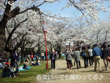 2009桜-012