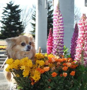 お花の中で