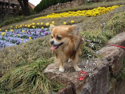 お花咲いてまちゅ♪