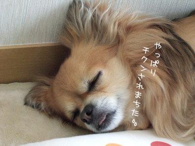 疲れまちた