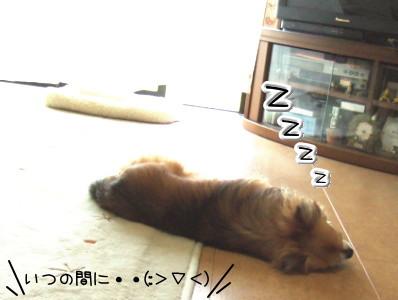 ぱたっ・・zzzzz・・・