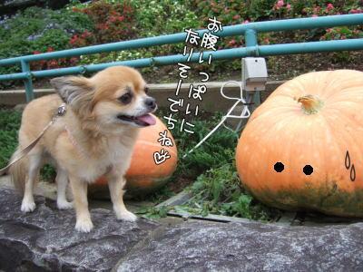 大っきいかぼちゃたん♪
