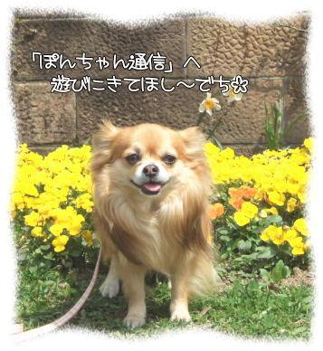 ぽんちゃん通信♪
