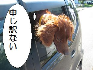 2009_0826_134141-IMG_6137.jpg