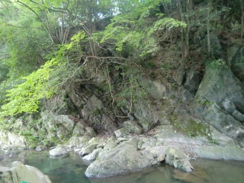渓谷のブランコ