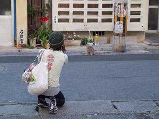 沖縄猫1ポッパンク