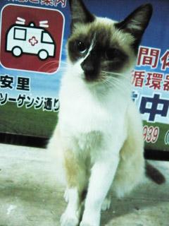 沖縄猫2ポッパンク