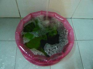 洗濯2_ポッパンク