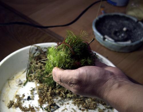 水草を貼り付けて