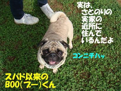 DSC01172.jpg
