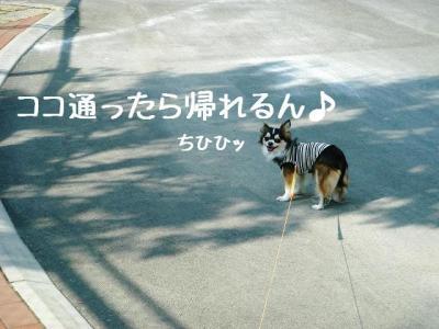 2009040508.jpg