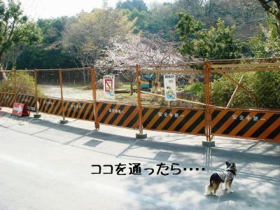 2009040509.jpg