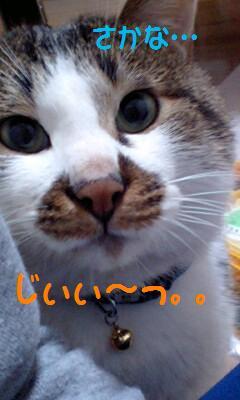 PA0_01302.jpg