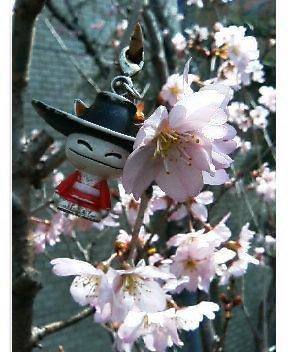 2009-0320_sakura.jpg
