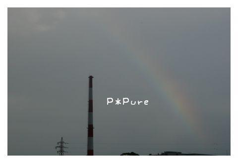 niji pp