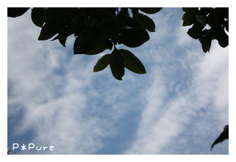 sky11 pp