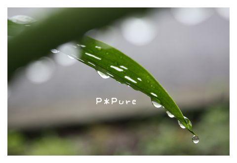 pp5.jpg