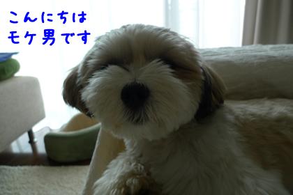 042_1.jpg