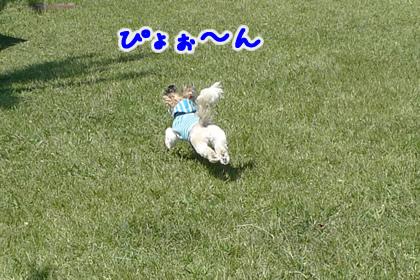 062_19.jpg