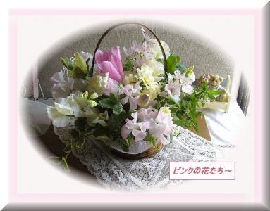 P1140506ピンクの花たち