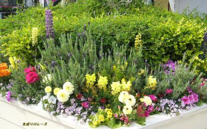 P1140740花たち