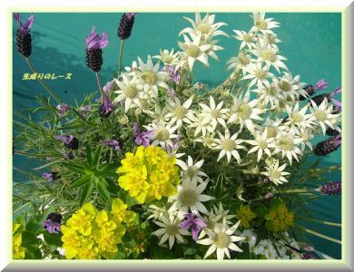 P1140760花たち